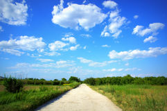 Dirt road in summer field Royalty Free Stock Photo