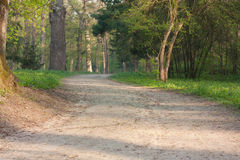 Dirt road in the summer forest. Landscape Royalty Free Stock Photography