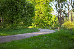 Dirt road in summer park Stock Image