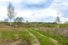 Dirt road in the summer Russian field Royalty Free Stock Photos