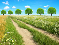Dirt road in sunny day Stock Photo