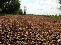 Dirt road sunshine on the country with natural light. Transportion Royalty Free Stock Image