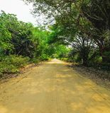 Dirt road surrounded by the forest known as Estrada Parque do Pa Royalty Free Stock Photo