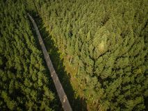 Dirt road surrounded by pine tree forest during nice summer sunset. royalty free stock photos