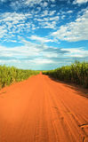 Dirt road surrounded by sugar cane plantation Stock Images