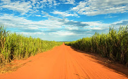 Dirt road surrounded by sugar cane plantation Stock Photo