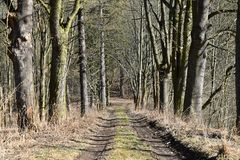 Dirt road surrounded by the tree after winter Stock Photo