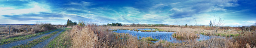 Dirt Road Swamp Panorama Royalty Free Stock Image