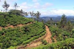 Dirt road and tea Stock Photos