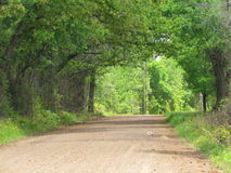 Dirt Road. Texas Dirt Road Trees Red Backroad Country Day County Small Town Royalty Free Stock Image