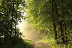 Free Dirt Road Through A Misty Spring Forest At Dawn Rural Road Through An Spring Deciduous Forest In The Sunshine The Morning Fog Stock Image - 139454361