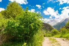 A dirt road in the Tien Shan mountains in the spring Royalty Free Stock Photos
