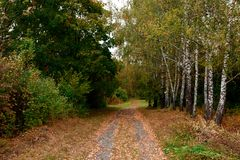 Dirt road to the autumn forest royalty free stock image