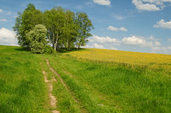 Dirt road to the birch grove on the horizon Stock Photos