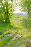 Dirt Road to a Field Royalty Free Stock Photos