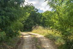 Dirt road to the forest. Composite summer landscape. Few bushes on both sides of the road royalty free stock photos