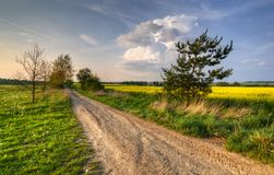 Dirt road to home. Spring landscape with dirt road between fields Stock Images