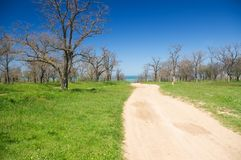 Road to the sea. Dirt road to the sea through the spring Park Royalty Free Stock Image