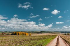 The dirt road to the village across the field on which cows are grazed. Mari El, Russia royalty free stock photos