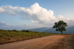 Dirt road track Stock Images