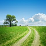 Dirt road and tree on horizon. Meadow with dirt road and tree on horizon Royalty Free Stock Images