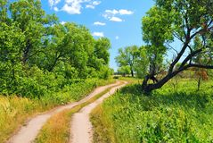 Dirt road between trees Stock Photo