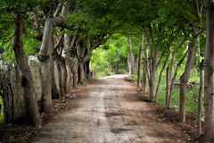 Dirt road with trees. Alongside at the island gili  meno, indonesia Royalty Free Stock Photography