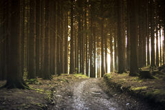 Dirt Road Between Trees during Daytime Stock Photography