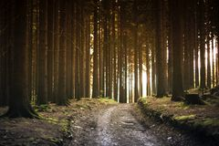 Dirt Road Between Trees during Daytime Royalty Free Stock Photos