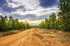 The dirt road with trees on either side.  Stock Photography