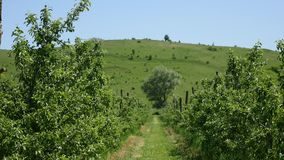 Dirt road between trees in the field.  stock video footage