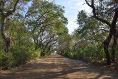 Dirt road through trees, Florida, USA Stock Photo