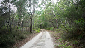 Dirt road and trees Royalty Free Stock Photo