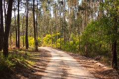 Dirt road trough woods under sunlight. In Portugal Royalty Free Stock Image