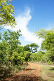 Dirt Road Turning into the Woodlands Royalty Free Stock Photo