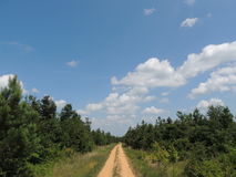 Dirt Road under Blue Sky Royalty Free Stock Photos