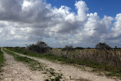 Dirt road. Under cloudy skies in Everglades Holiday Park stock images
