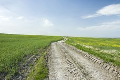 Dirt road uphill and field. Long country road through the fields and blue sky royalty free stock photo