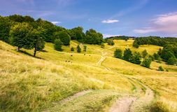 Dirt road uphill through grassy rolling hills. Beautiful mountainous landscape with beech forest in summer. cow cattle and woodshed in the distance. location Royalty Free Stock Photography