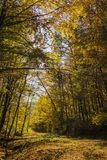Dirt road through vibrant autumnal Stock Photography