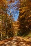 Road through forest in the fall. Dirt road through vibrant autumnal landscape Royalty Free Stock Photo