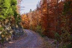 Road through forest in the fall. Dirt road through vibrant autumnal landscape Stock Photos