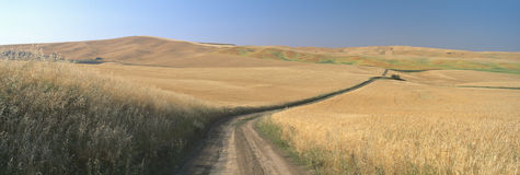 Dirt road through wheat field, Royalty Free Stock Photos