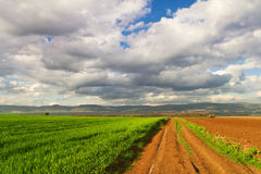 Dirt road and wheat of field Royalty Free Stock Photo
