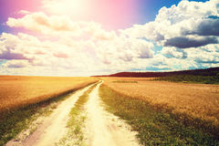 Dirt road in a wheat field Stock Image