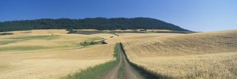 Dirt road through wheat field, Kamiak Butte, S.E. Washington Royalty Free Stock Photos