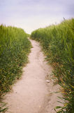 Dirt road in the wheat field spring landscape - Vertical closeup. Dirt road in the wheat field summer landscape a cloudy day Stock Images