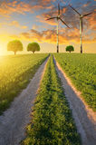Dirt road in wheat field Royalty Free Stock Image