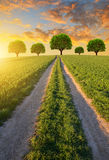 Dirt road in wheat field at sunset. Royalty Free Stock Photos