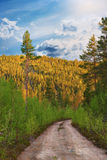 Dirt road in wilderness. Area with conifer trees in bright sunshine Royalty Free Stock Photos
